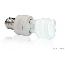 Ampoules Fluocompacte -...