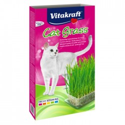 Cat Grass : Herbe à chat à...