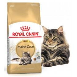 Maine Coon - Adulte - Royal...