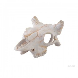 "Décoration ""Buffalo Skull""..."