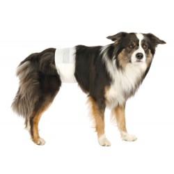 Protections pour chiens...