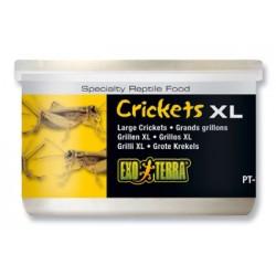 Grillons XL en boites - 34 g