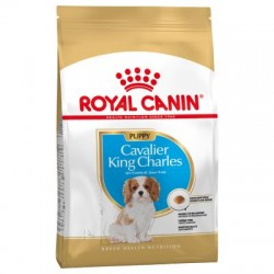 Cavalier King Charles -...
