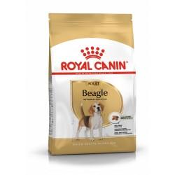Beagle -  Adulte
