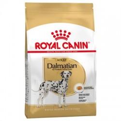 Dalmatien -  Adulte - 12 kg