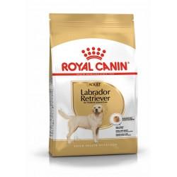 Labrador -  Adulte