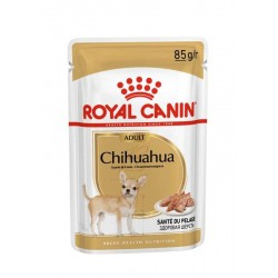 Chihuahua - Adulte - Mousse...