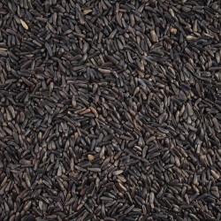 Graines de Niger