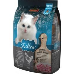 Kitten - Léonardo