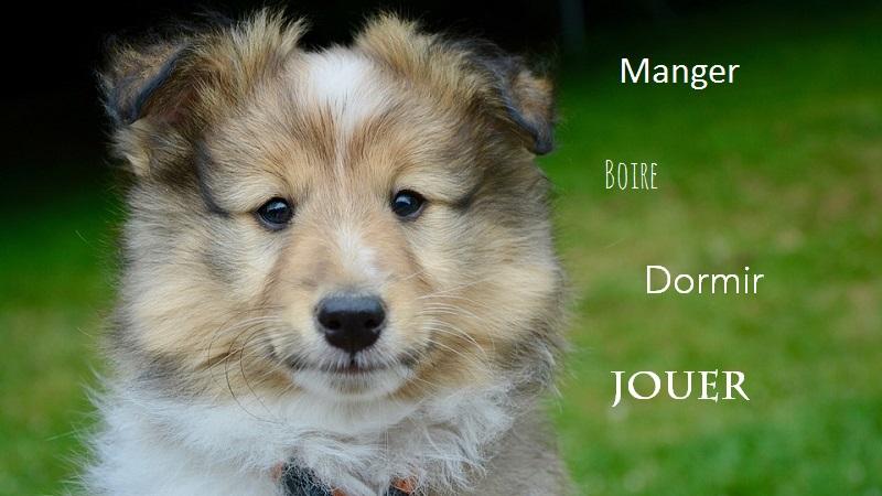 Bonheur des chiens