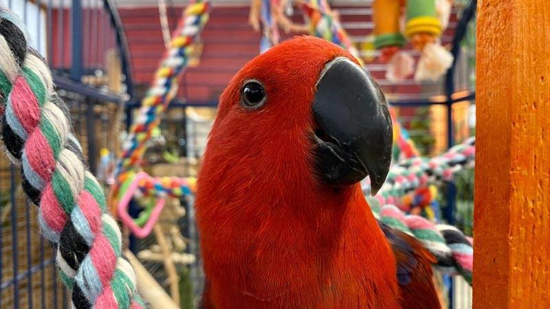 bonheur oiseaux