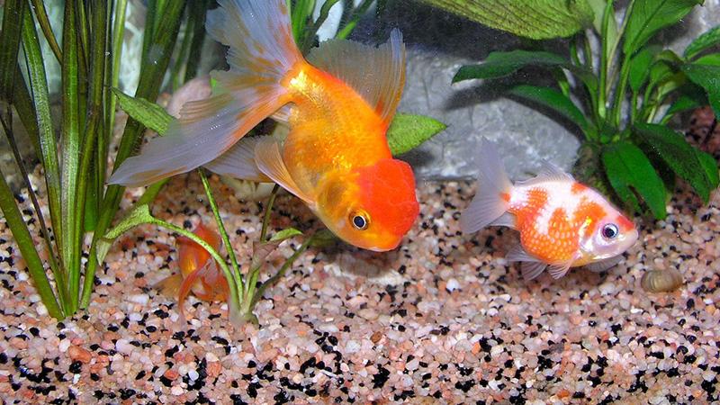 bonheur poisson
